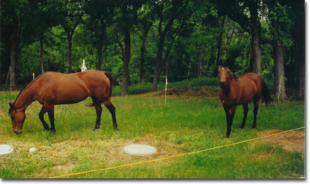 picture of Dancer & Moonie in front yard