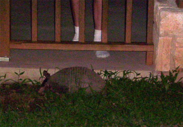 picture of July 2005 armadillo