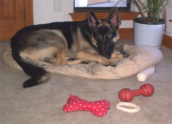 picture of troubador with his toys in October 2005