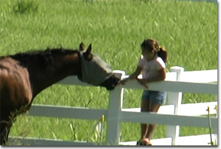 picture of neighbor kids feeding carrots to Dancer & Moonie on July 4, 2004