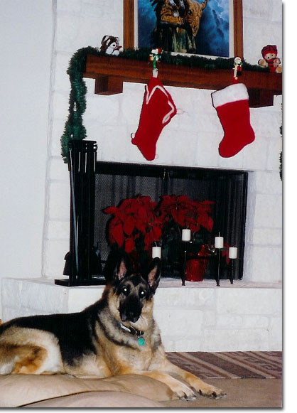 picture of Bach at Christmas 2003