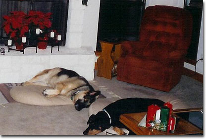 picture of Bach & Sasha at Christmas 2003