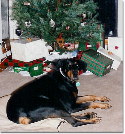 picture of Sasha at Christmas 2003