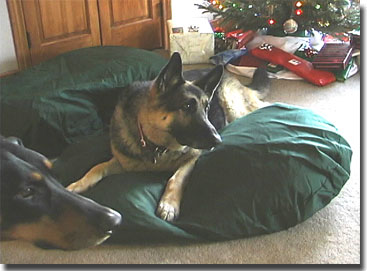 picture of bach and Sasah with their new beds Christmas 2002