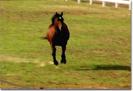 picture of Dancer galloping back to her stable